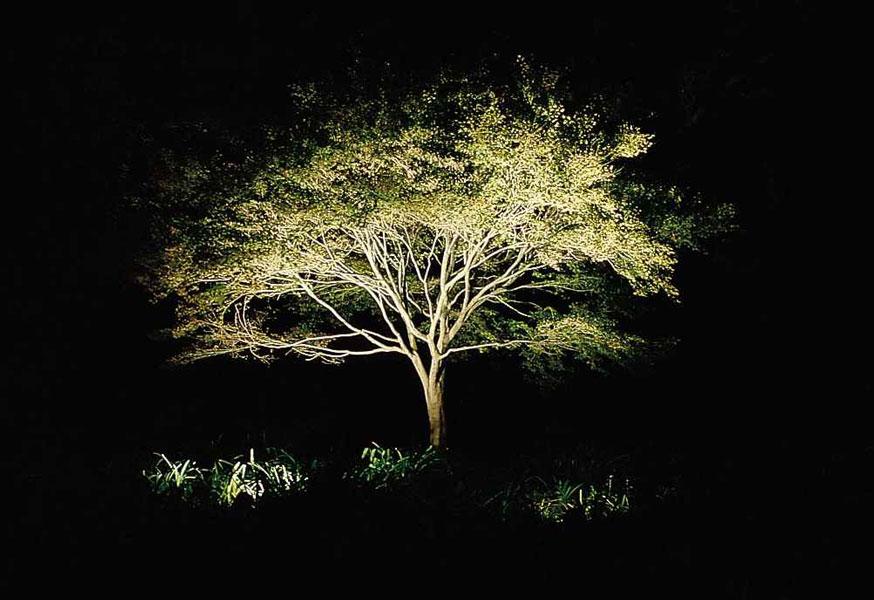 Low Voltage Landscape Lighting Planting Design